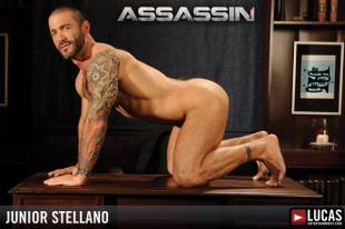 Junior stellano 7 310x240