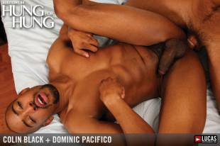 Mla44 03 colin black dominic pacifico 02 310x240