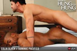 Mla44 03 colin black dominic pacifico 04 256x178