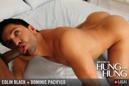 Mla44 03 colin black dominic pacifico 07 256x178